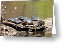 Turtles Greeting Card