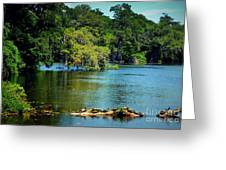 Turtles On A Log Arlie Lake Greeting Card