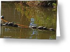 Turtles On A Log Greeting Card
