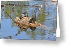 Turtles On Stump Greeting Card