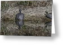 Turtles Sunning On Bank Greeting Card