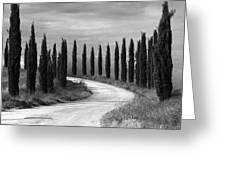 Tuscan Cedars Greeting Card