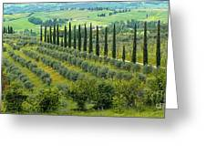 Tuscan Panoramic 3 Greeting Card