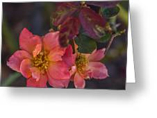 Tuscan Sun Rose Greeting Card