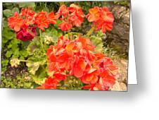 Tuscany Flower Garden Greeting Card