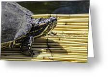 Tutle On Raft Greeting Card