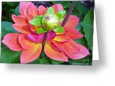 Tutu Dancer Flower Greeting Card