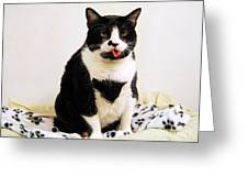 Tuxedo Cat Sticking Out Her Tongue Greeting Card by Catherine Sherman