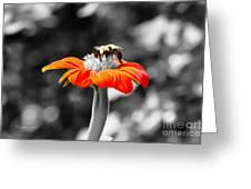 Tweedle Bumble And Tweedle Bee Greeting Card