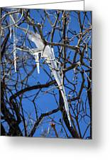 Twigs And Ice Greeting Card