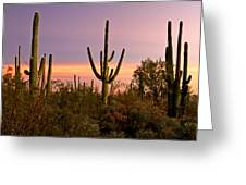Twilight After Sunset In The Cactus Forests Of Saguaro National Park Greeting Card