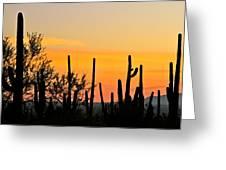 Twilight After Sunset Sonoran Desert Greeting Card