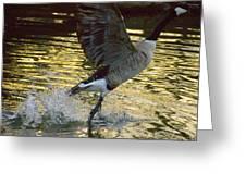 Twilight Goose I Greeting Card
