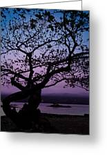 Twilight On Hilo Bay Hawaii Greeting Card