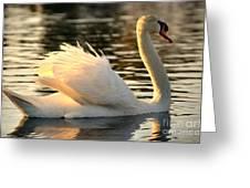 Twilight Swim Greeting Card