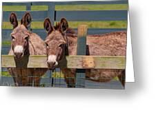 Twin Donkeys Greeting Card