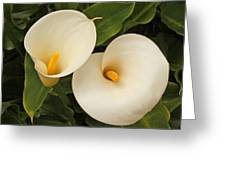 Twin Easter Sunday Lillies Greeting Card