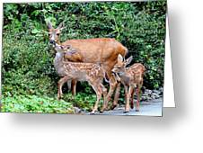 Twin Fawns And Mother Deer Greeting Card