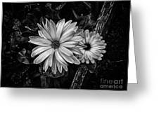 Twin Flowers And A Branch  Greeting Card