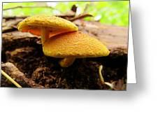 Twin Fungi Greeting Card