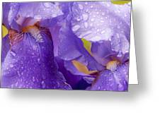 Twin Iris Greeting Card