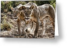 Twin Lions Greeting Card