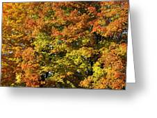 Twin Maples Greeting Card