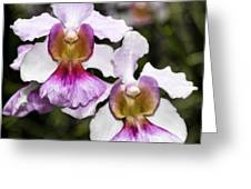 Twin Orchids Greeting Card