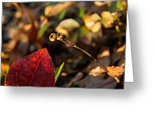 Twin Spotted Wintergreen Pods Greeting Card