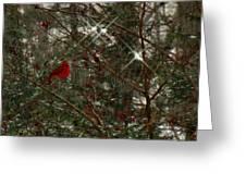 Twinkle Twinkle Little Bird Greeting Card by Sharon Costa