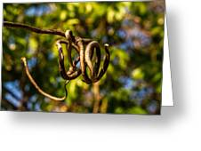 Twirling Vine Tendril Greeting Card