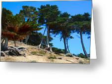 Twisted Cypress  Greeting Card