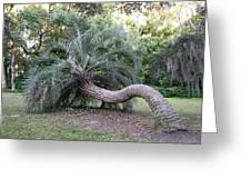 Twisted Palm Greeting Card