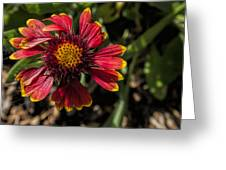 Twisted Petals Greeting Card