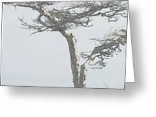 Twisted Tree 2 Greeting Card