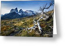 Twisted Tree And Trail Greeting Card