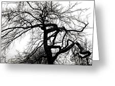 Twisted Tree In Black And White Greeting Card