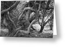 Twisted Trees Greeting Card