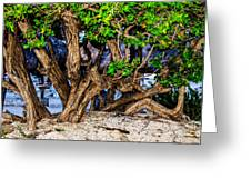 Twisted Trunks Greeting Card