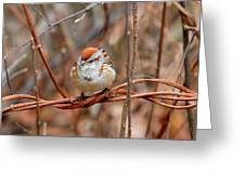 Twisted Vine Perch Greeting Card