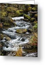 Twisted Waters Greeting Card