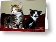 Two Adorable Kittens Greeting Card