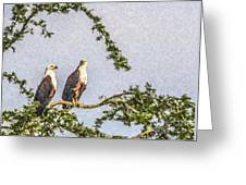 Two African Fish Eagles Haliaeetus Vocifer  Greeting Card