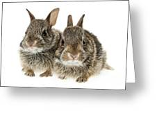 Two Baby Bunny Rabbits Greeting Card
