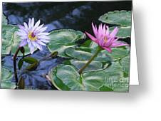 Two Beauties Greeting Card