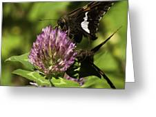 Two Beautiful Butterflies Greeting Card