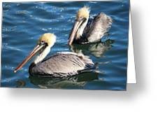 Two Beautiful Pelicans Greeting Card