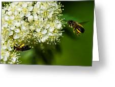 Two Bees On A Rowan Truss - Featured 3 Greeting Card