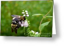 Two Bees On Flower Greeting Card