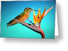 Two Birds Of Paradise Greeting Card